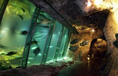 Exploris aquarium to re-open on Monday