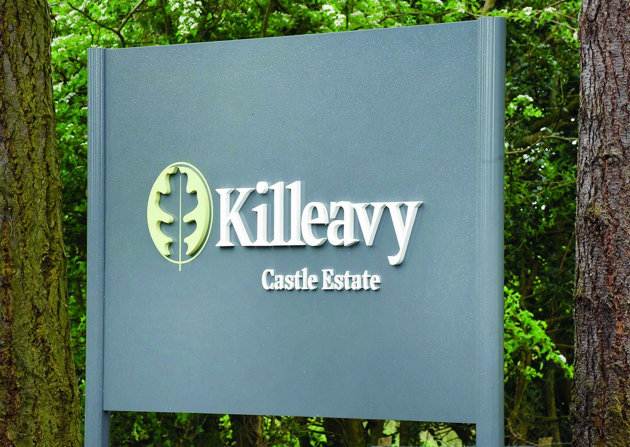 Killeavy rises from the ruins