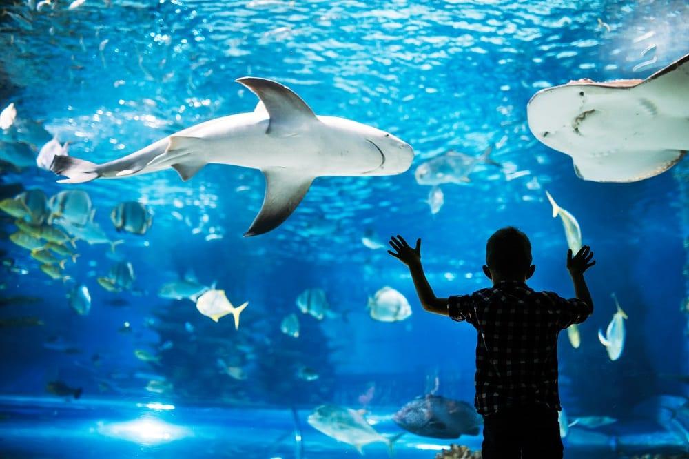 New Aquarium to open in Belfast's Titanic Quarter